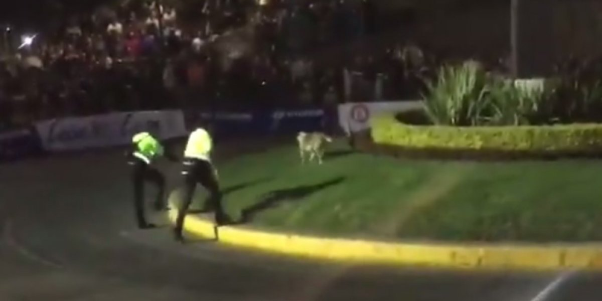 Perro defeca en plena arrancada del Rally Mexico