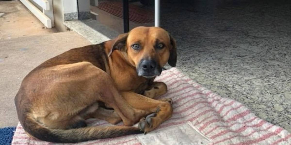 Perrito espera desde hace 4 meses a su dueño afuera de un hospital