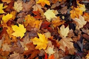O outono traz boas notícias para quatro signos do zodíaco; descubra quais