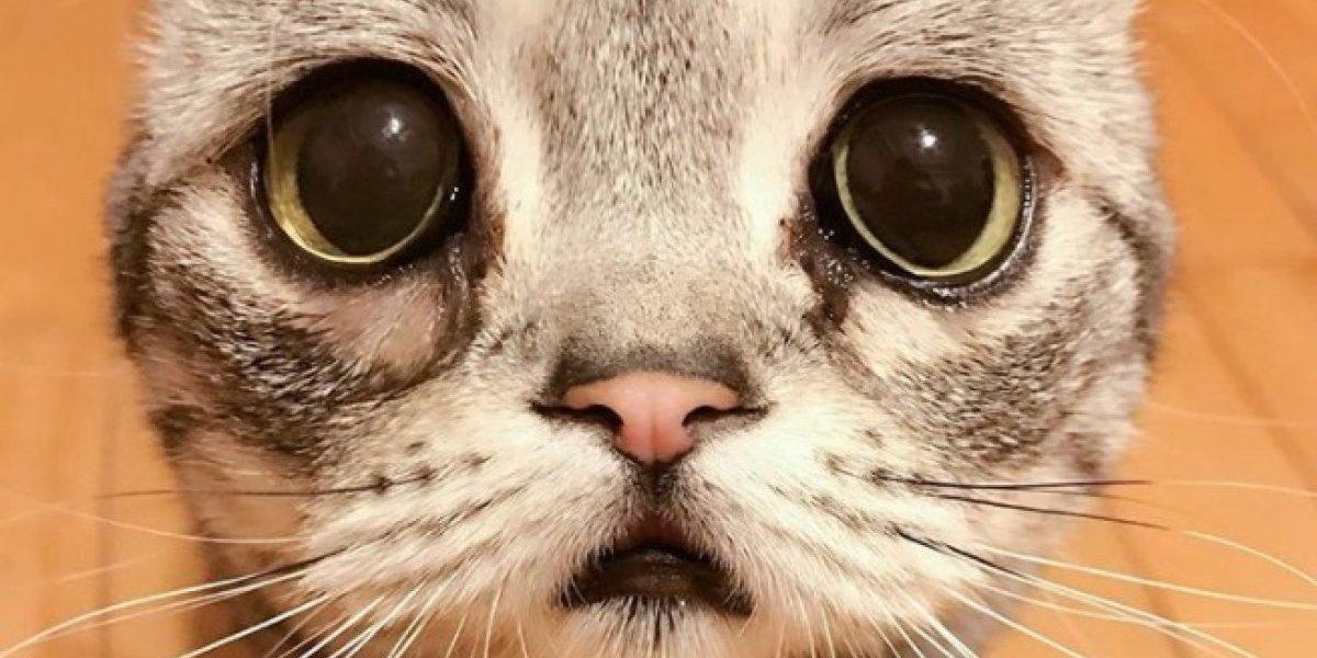 Es un furor en Instagram: así son las fotos del gato más tierno, expresivo y abrazable del mundo