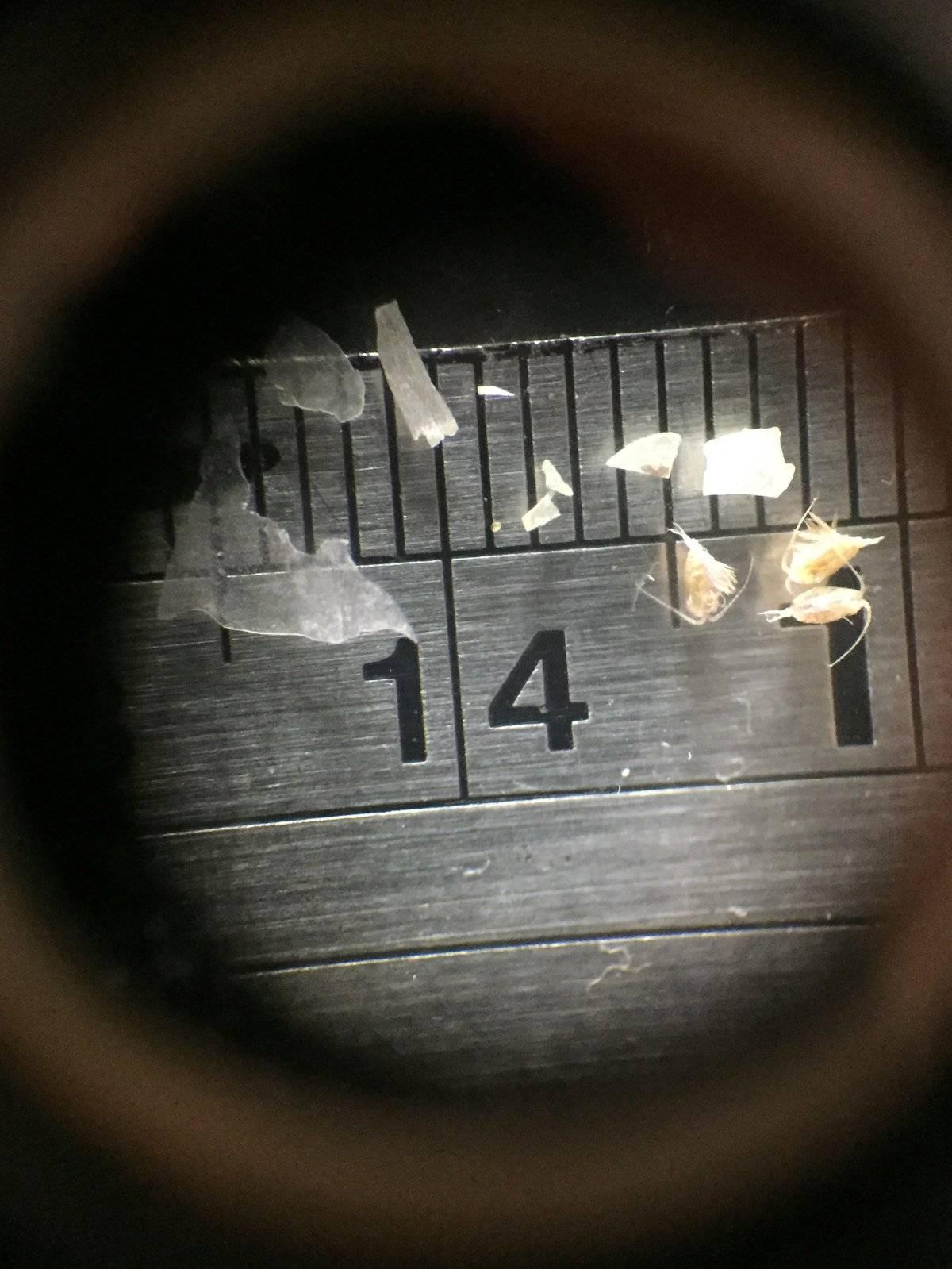 Los microplásticos son pequeñas partículas de plásticos que miden menos de 5 milímetros