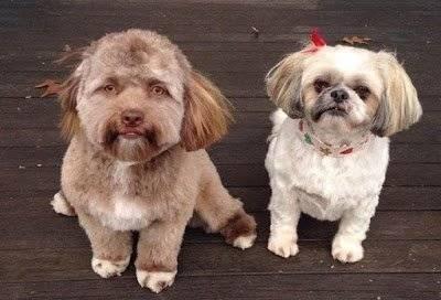 Bob, el perro con cara de humano
