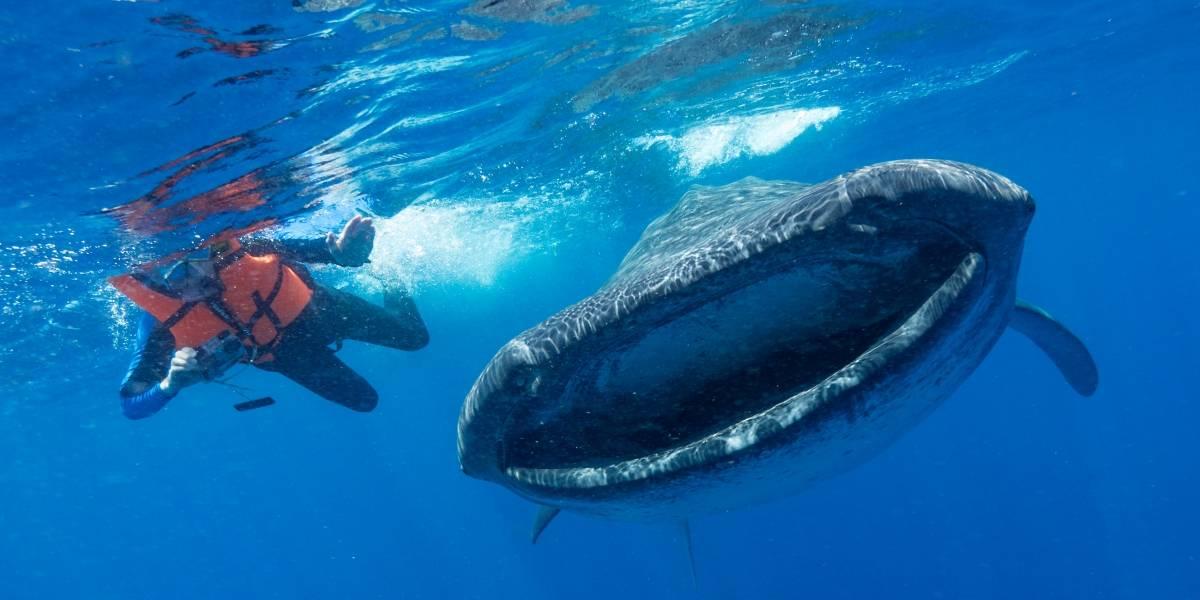 Contaminación marina con microplásticos  podría acabar con ballenas, rayas y tiburones