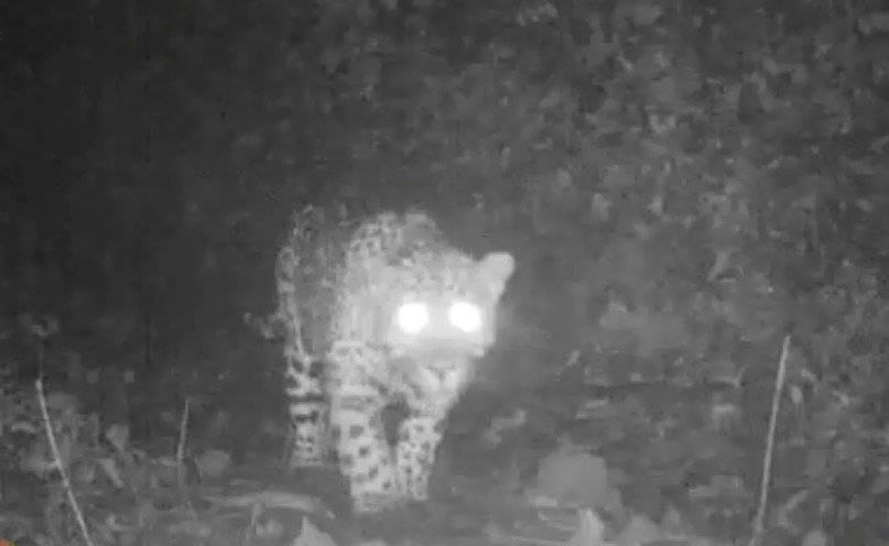 Jaguar en Antioquia