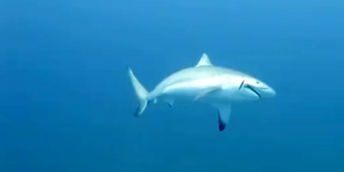 Tubarões voltam a assustar turistas em Fernando de Noronha