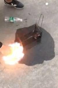 ¡Indignante! Hombres incendian a una rata viva