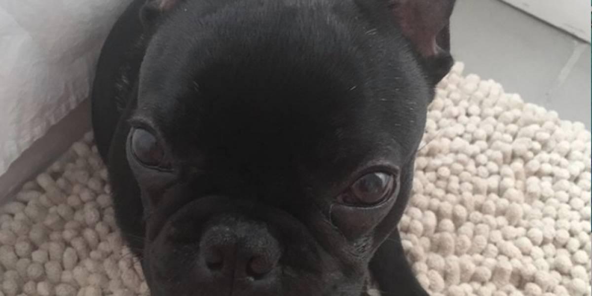 Perro muere sofocado tras ser puesto en compartimiento superior de un avión