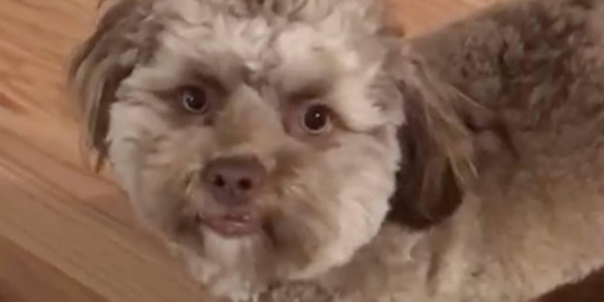 El inquietante perro con