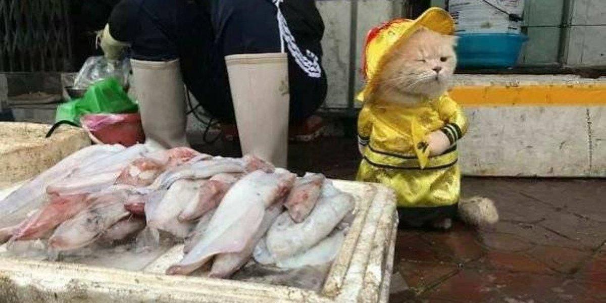 A história de Dog, o gato que vende peixe em uma feira no Vietnã