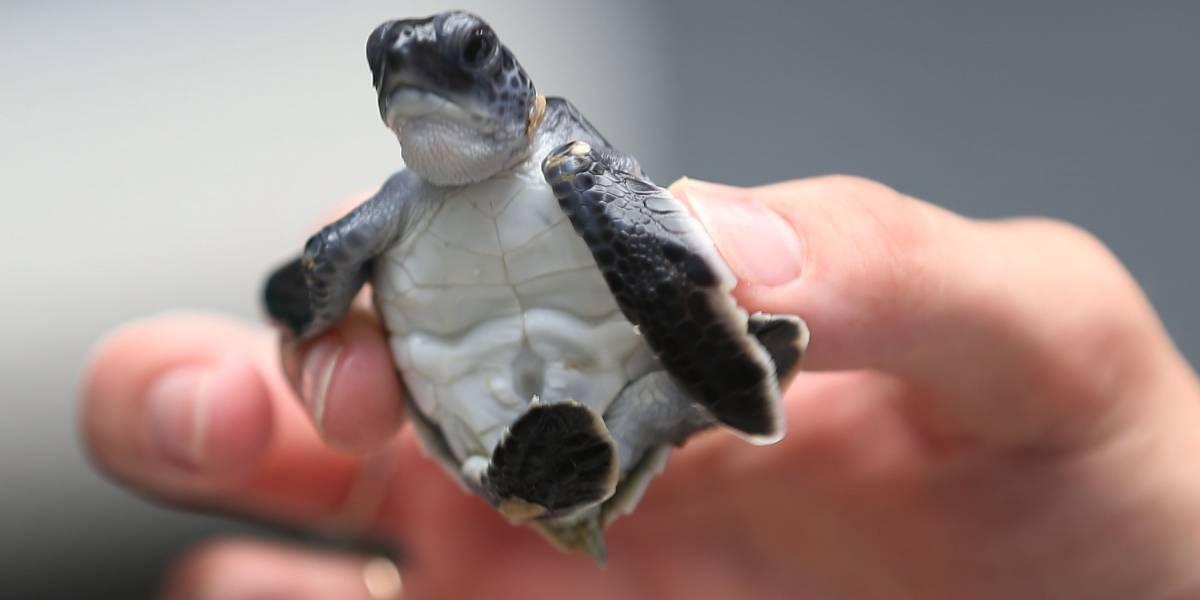 Estados Unidos alerta los peligros de tener tortugas como mascotas
