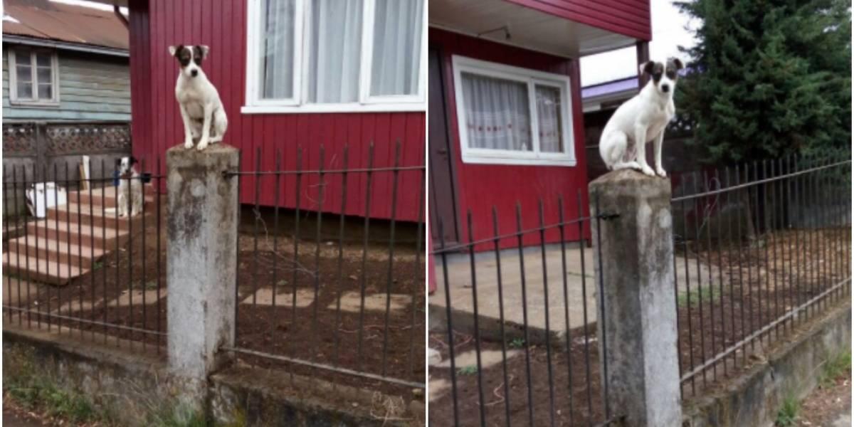 """""""En su otra vida fue alguna vecina"""": perrito copuchento toma la mejor posición para saber todo lo que pasa en el barrio"""