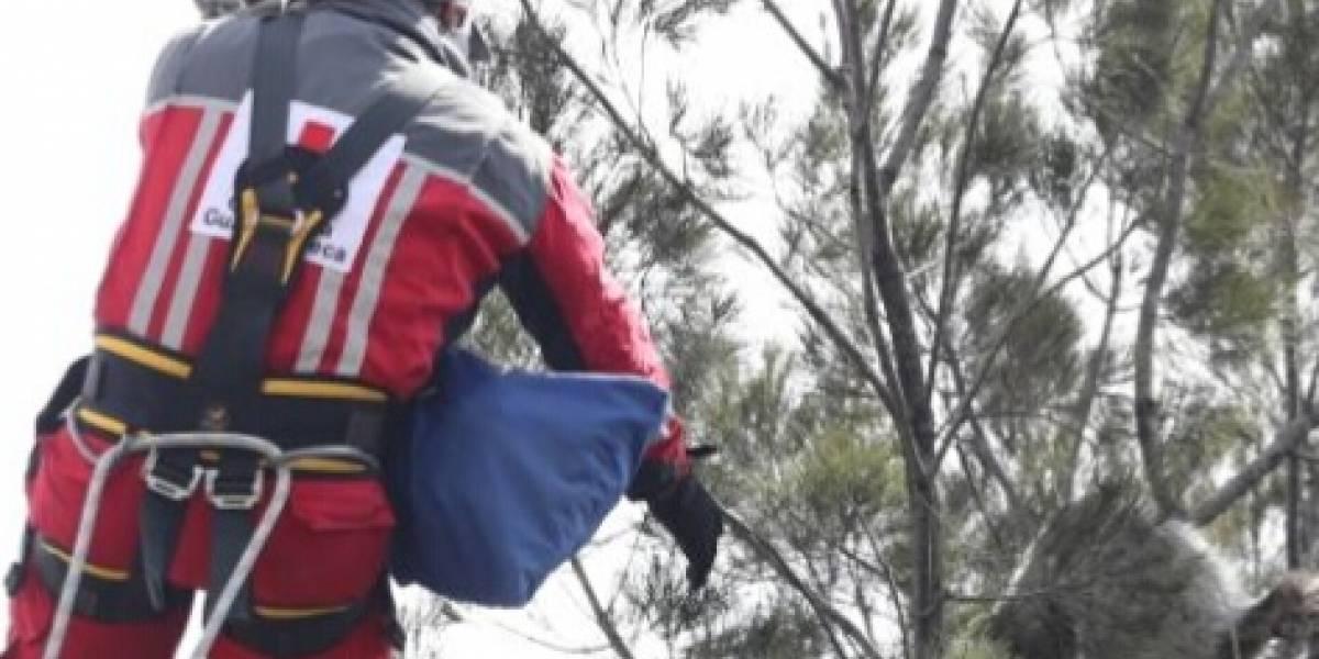 VIDEO. Rescatan a un gato atrapado en un árbol del Periférico