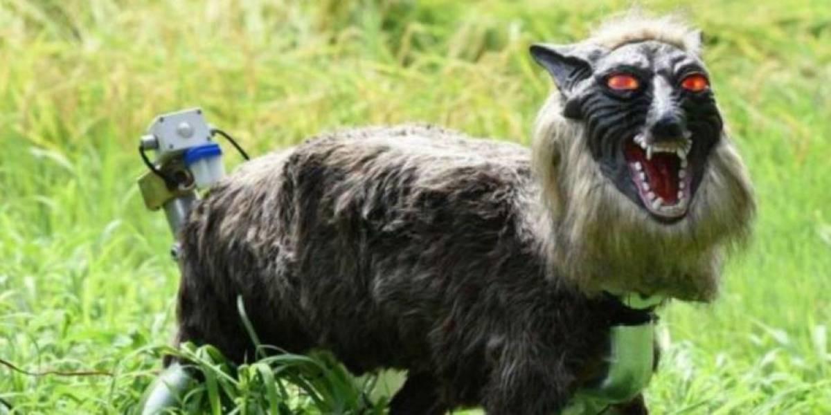 Aterrador lobo robótico aleja a los animales de los cultivos