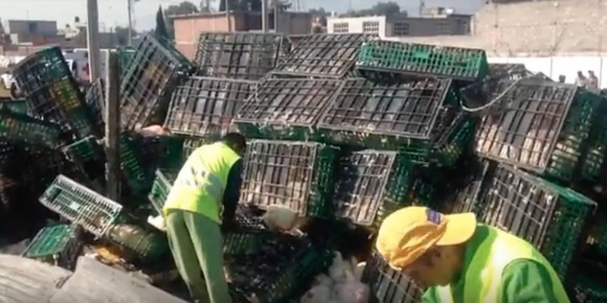 Vuelca tráiler con gallinas en Circuito Exterior Mexiquense