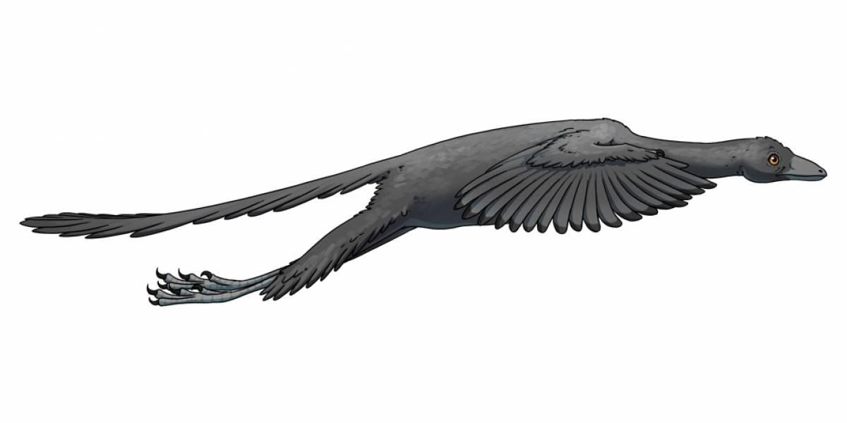 Cientistas descobrem que famosa espécie de dinossauro era capaz de voar