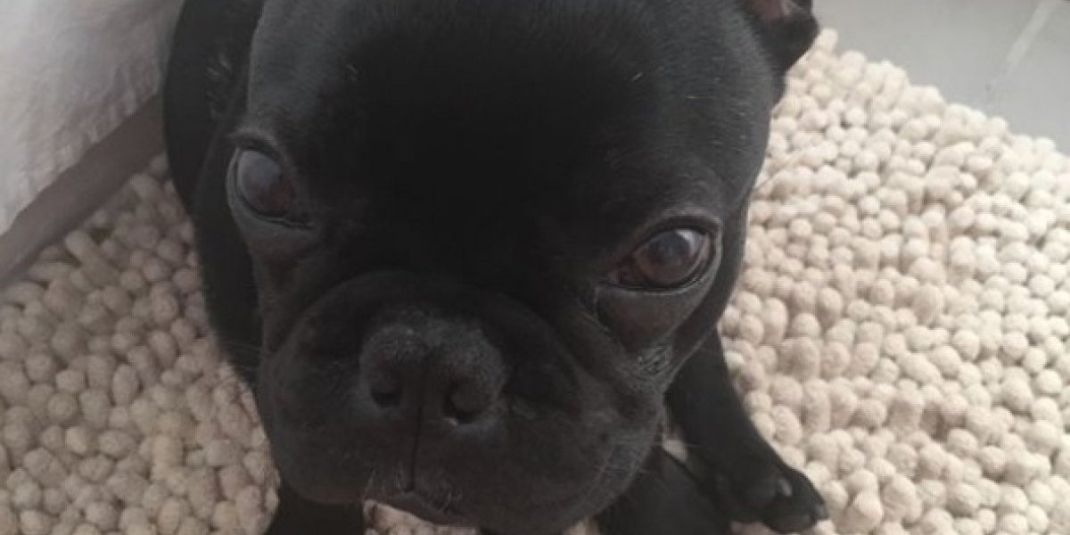"""¡Kokito, despierta!"": cachorro murió luego de que aerolínea obligara a su dueña a encerrarlo dentro de un compartimiento"