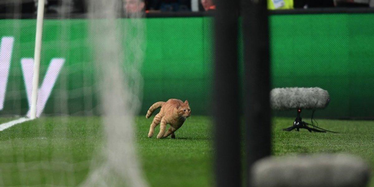 VIDEO. Gato ingresa a la cancha en un juego de la Champions y se vuelve viral