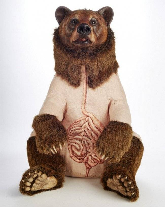 grizzly11650x1024.jpg