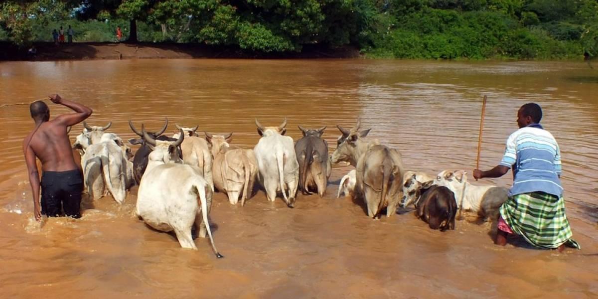 Capturan a 12 presuntos integrantes de una banda dedicada al contrabando de ganado