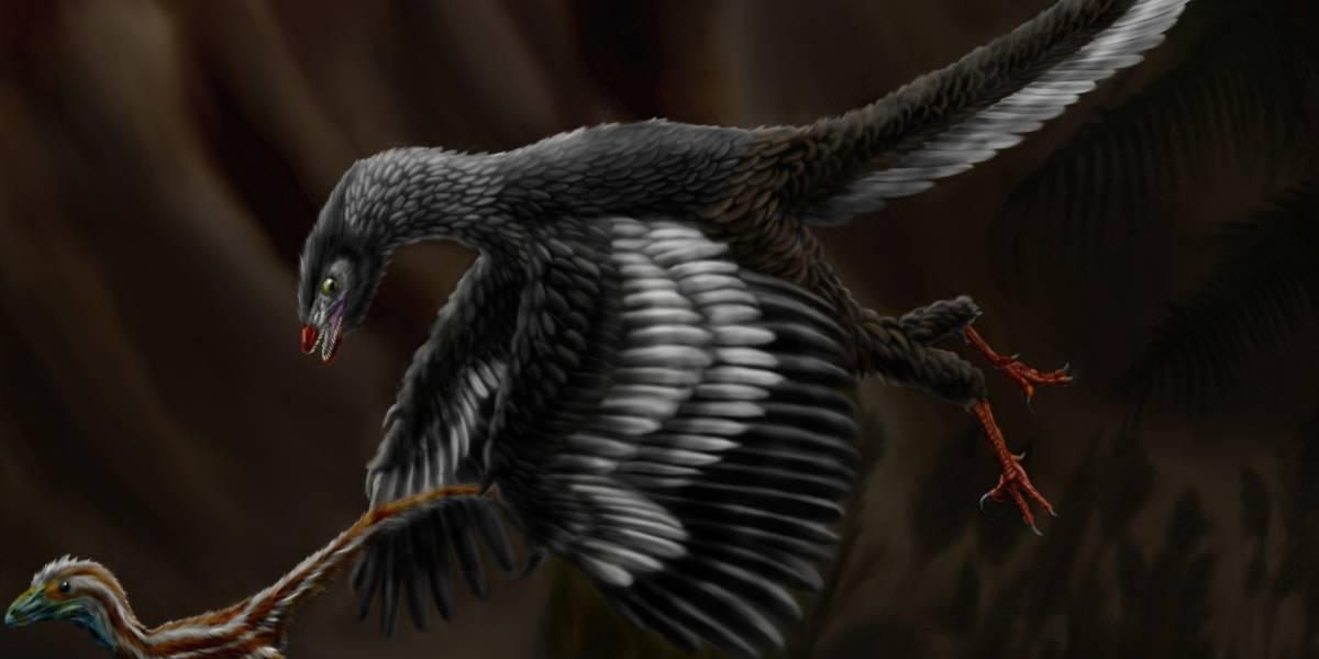 Estudio concluye que el Archaeopteryx fue el primer dinosaurio volador