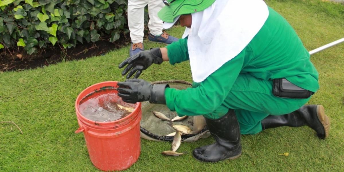 Secretaría de Ambiente investiga mortalidad de peces en el parque de los Novios