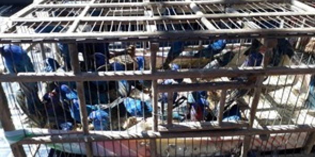 Profepa asegura 172 aves que viajaban en el portaequipaje de un camión de pasajeros