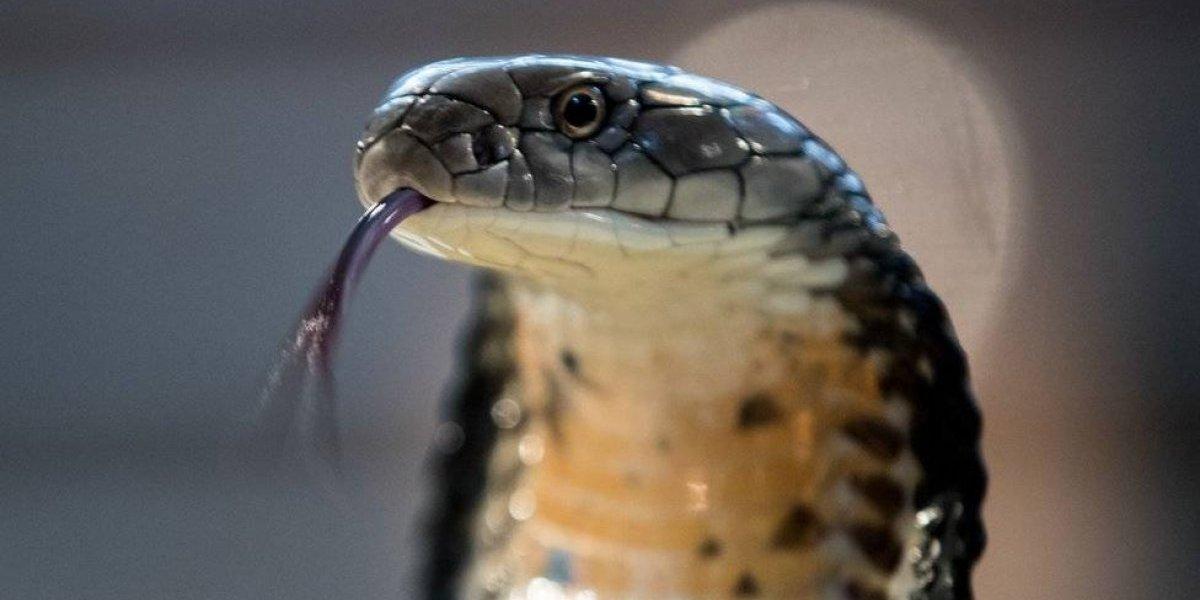 No se dio cuenta que una serpiente la mordió mientras dormía y en la mañana amamantó a su hija con leche envenenada: ambas murieron