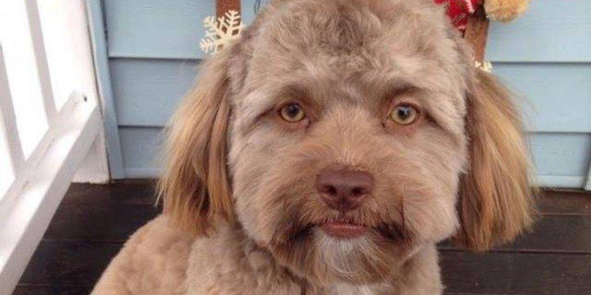 El parecido entre el perro con cara de humano y las celebridades