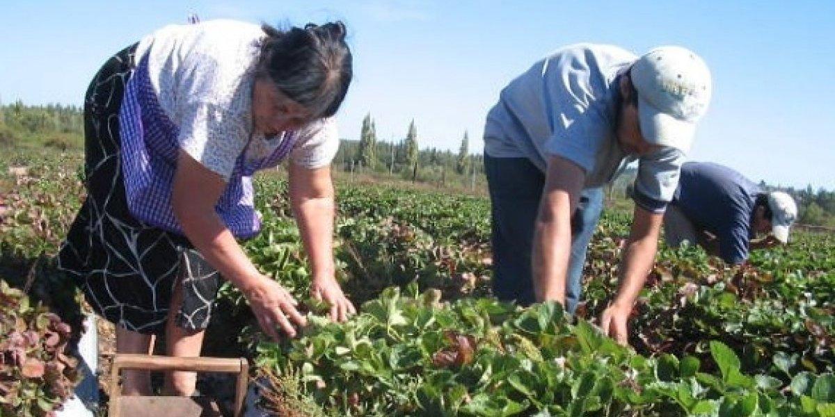 Por el Código de Aguas: ministerios de agricultura y obras públicas preparan una indicación al proyecto de ley