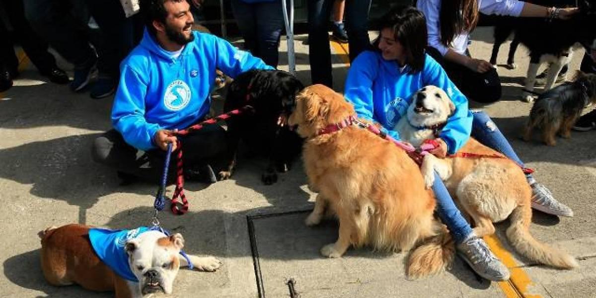 ¡Conózcalo! Este es el primer parque exclusivo para perros en Bogotá