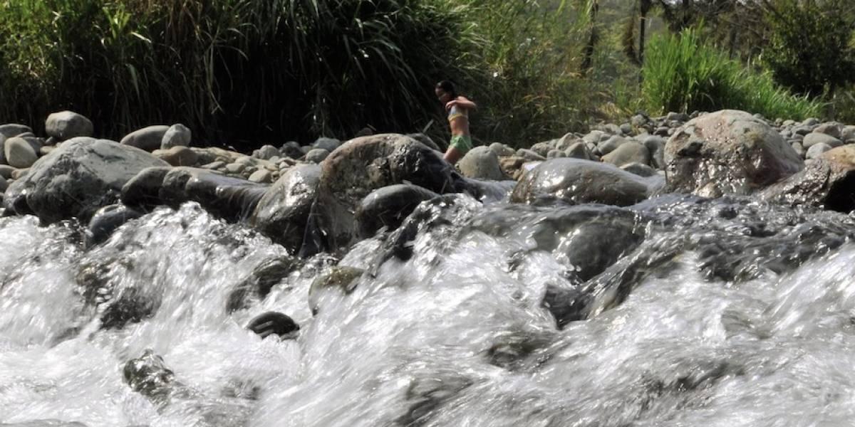 ¡Gigante! Animal de tres metros fue rescatado cerca de un río