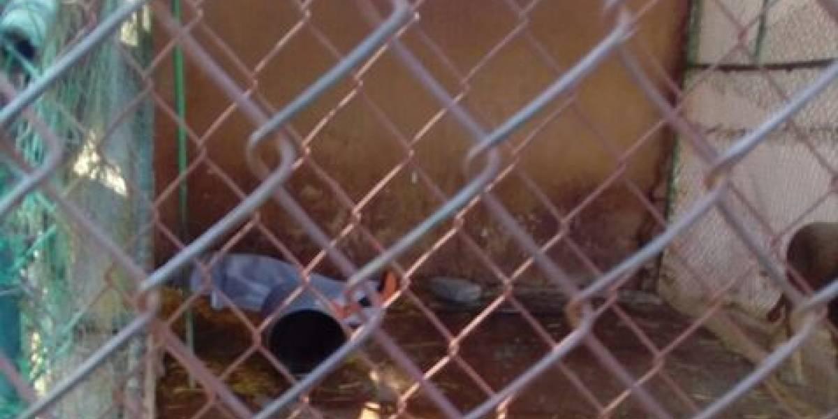 León asesina a su cuidador en el zoológico de Tulancingo