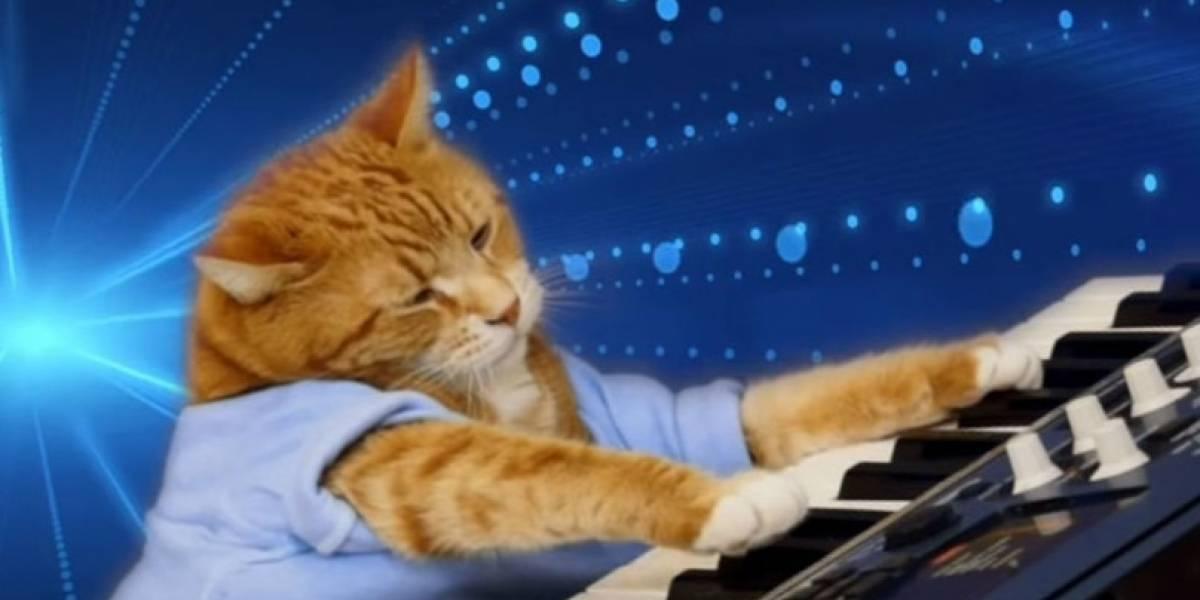 """""""Keyboard Cat"""" el gato más famoso de Internet, falleció este fin de semana"""