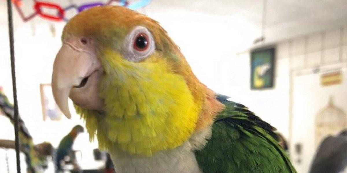 """""""Hurto exótico"""": roban seis aves avaluadas en miles de dólares en California"""