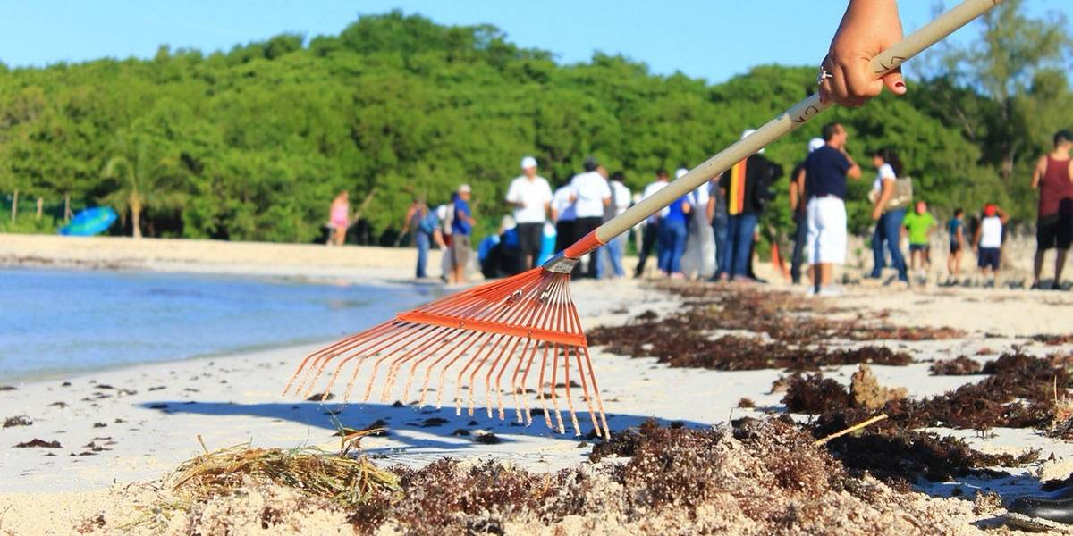 Autoridades de Cancún retiran más de 600 metros cúbicos de sargazo de playas
