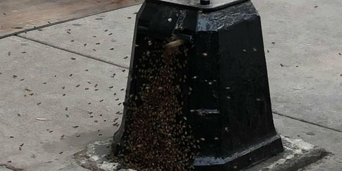 Denuncian enjambre de abejas en parque de la Nápoles