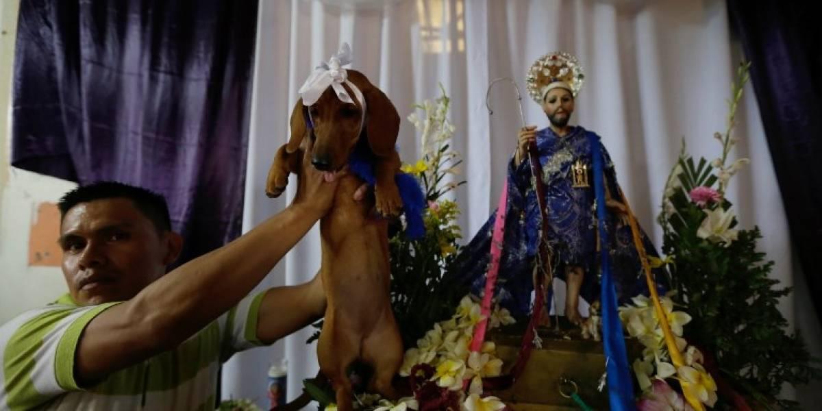 EN IMÁGENES. Nicaragua venera al santo de las mascotas y los enfermos con colorida procesión