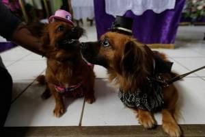 Mascotas son llevadas ante San Lázaro
