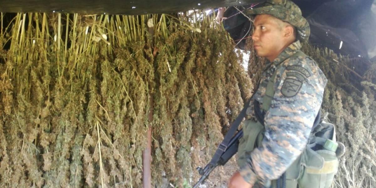 Localizan marihuana en la zona de adyacencia