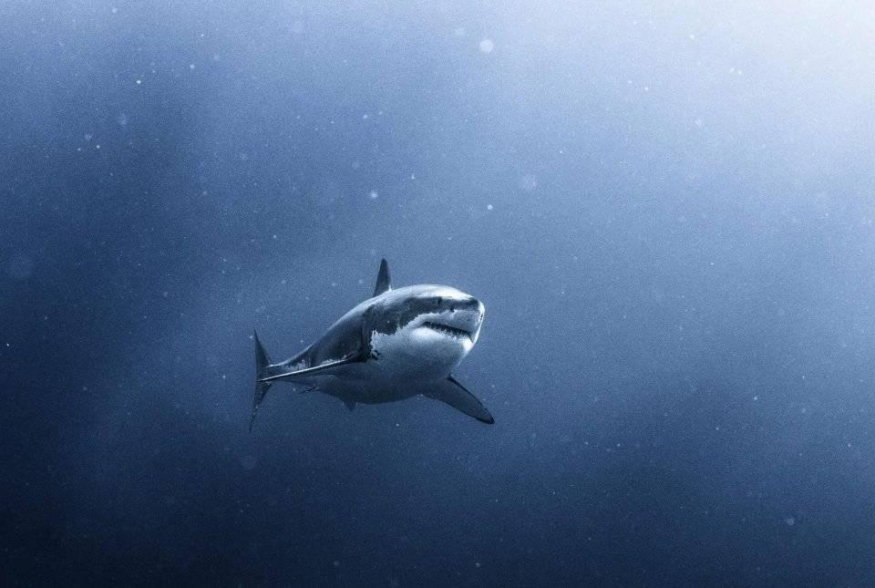 Foto: sharks_360