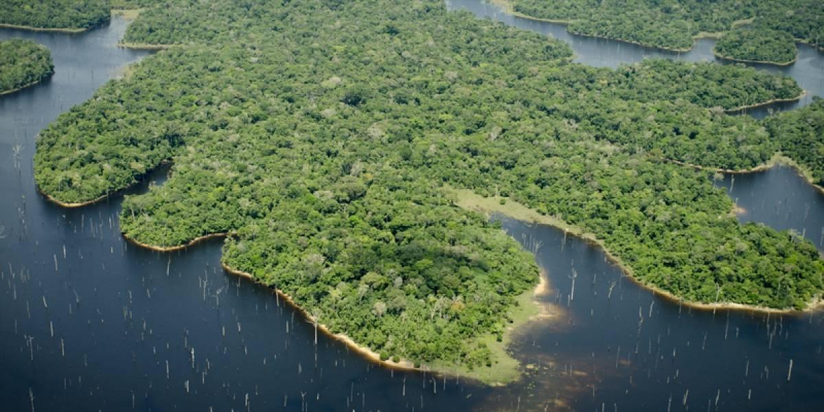 La mitad de las especies de plantas y animales están en peligro por el cambio climático en los espacios naturales más importantes del mundo