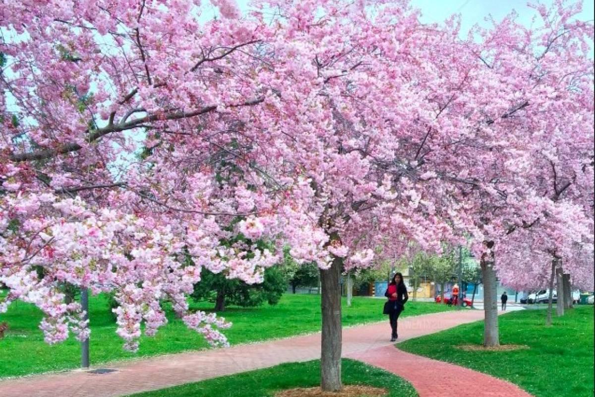 Imagenes De Paisajes De Primavera: Fotos De Primavera. 8001 Imgenes Gratis De Paisaje De