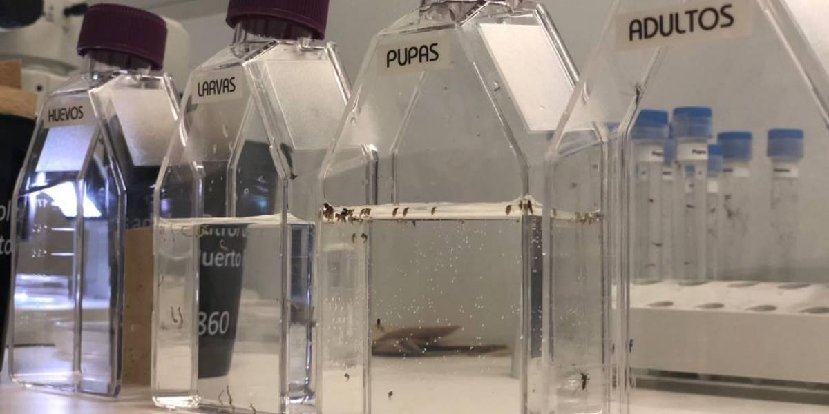 Unidad de Vectores estudia la resistencia del Aedes aegypti a insecticidas