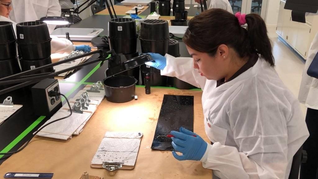 Una de las técnicas de laboratorio extrae los mosquitos que quedaron pegados a una de las trampas ubicadas por la Unidad de Vectores alrededor de la isla. / Foto: David Cordero