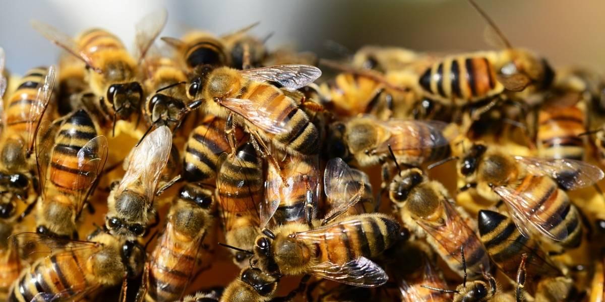 Tres hermanos fueron atacados por abejas en San Juan Sacatepéquez