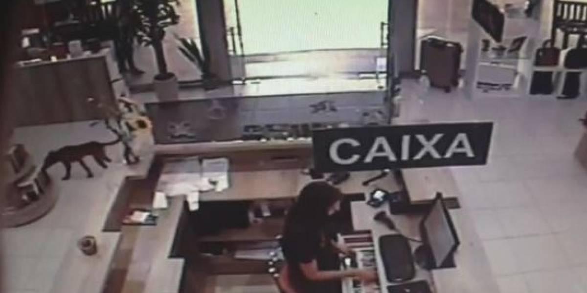 Câmeras de segurança flagram cachorro roubando livro