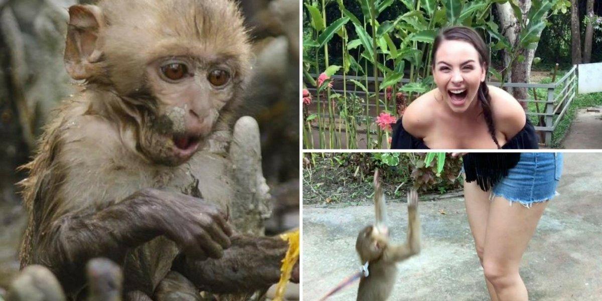 Macaco abaixa blusa de turista e vídeo faz sucesso nas redes socias