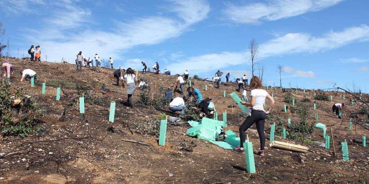 Reforestación exitosa: prendimiento de especies nativas alcanza entre un 80% y 90%