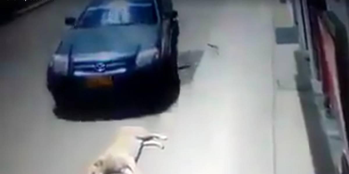 Video: Conductor pasa por encima de perrito dormido en calle de Bogotá