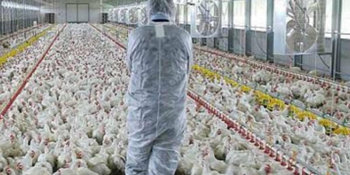 Preocupa y ocupa a productores de huevo la indagatoria de Cofece